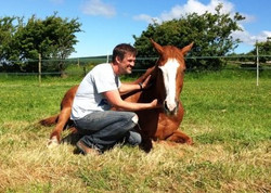 Sun and Mark relaxing in the paddock