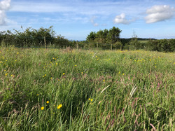 Rewilding the meadow and improving biodiversity