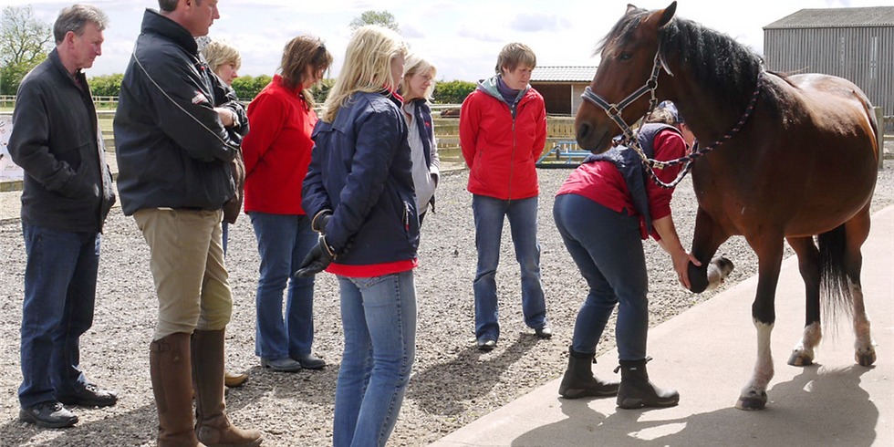 PRO-Active Integrative Hoof Care CPD Event for professionals 10th July 2021