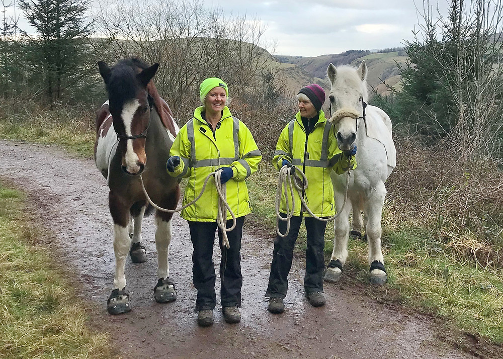 Holistic Reflections' Beccy and Val walking Yewcroft ponies Daffy and Nelly