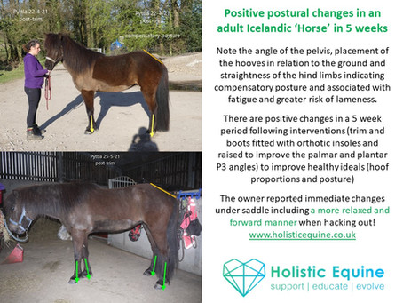 Low heels can lead to lameness in horses!