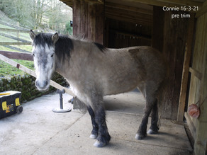 Why we trim the HORSE and not simply the HOOF!