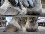Successful integrative barefoot hoof care needs teamwork!
