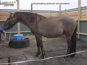 Normal versus Compensatory Posture