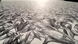 Monoculture detail
