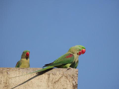 Concrete Jungles and Vocal Parrots