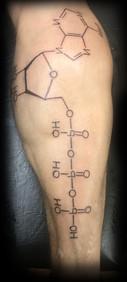 Tatouage d'une molécule chimique sur le molet d'un homme.