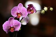 Orchidées maquillage danielle bélanger