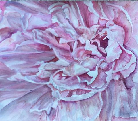 Pink Peony, framed