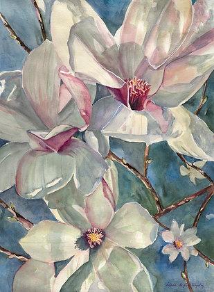 Magnolia Tulips, mounted