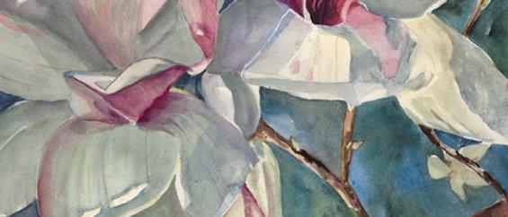 Magnolia Tulips