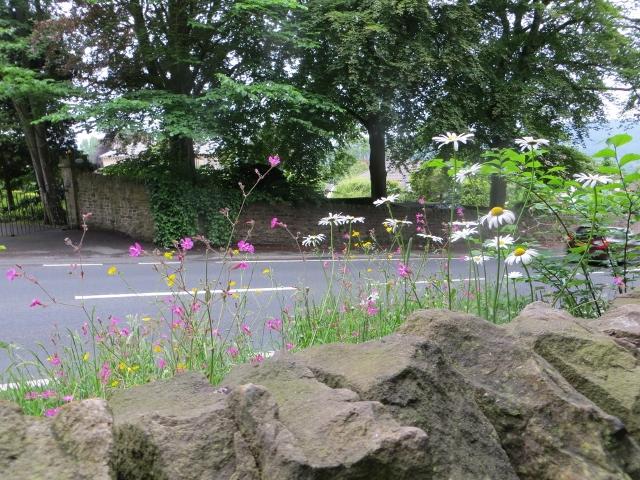 wildflowers Park Road