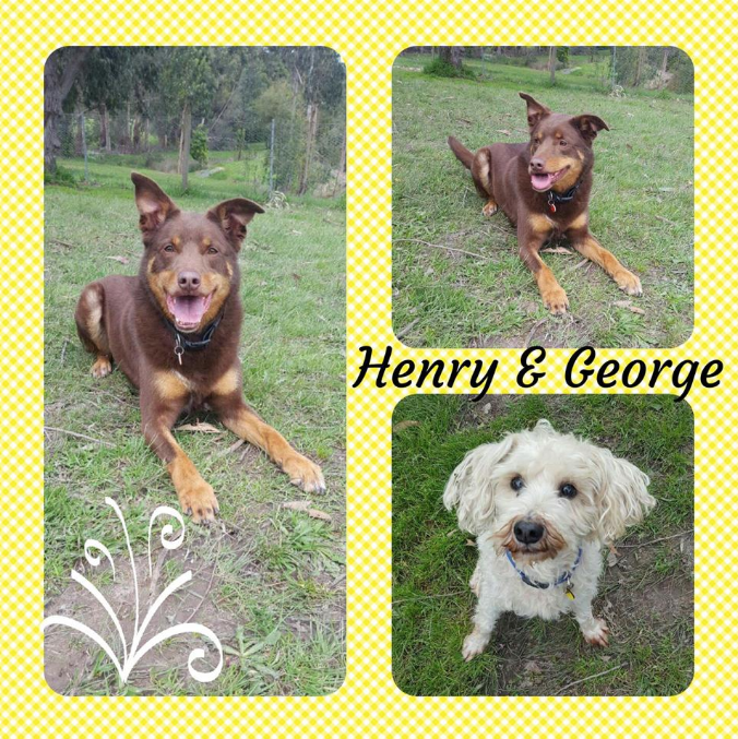 facebook post of brothers (dogs) at Badger Creek Boarding Kennels