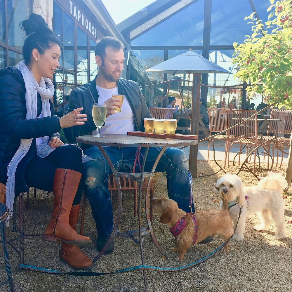 Pooches and Pinot Yarra Valley wine tours with your dog