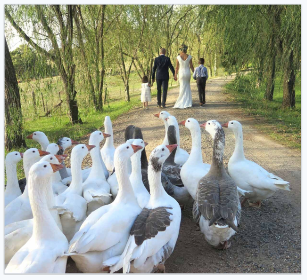 the geese were in attendance at this Wiggley Bottom Farm wedding