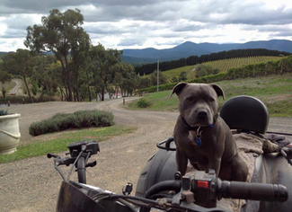 Wine Tours with Your Four Legged Friends