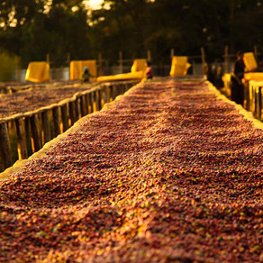 New Trading System to Benefit Coffee Grower Farmers