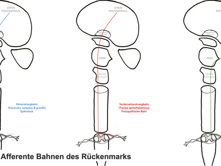 Bahnensysteme von Gehirn & Rückenmark