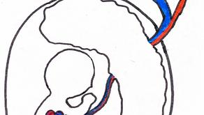 Kardiologie in der Pädiatrie