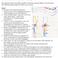 Ablauf: Behandlung der Unteren Extremität (Bigema)