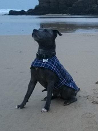 Blue Tartan Waterproof Dog Coat