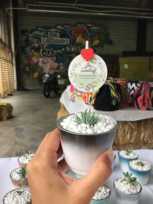 Laughter - Mini Succulent Pots