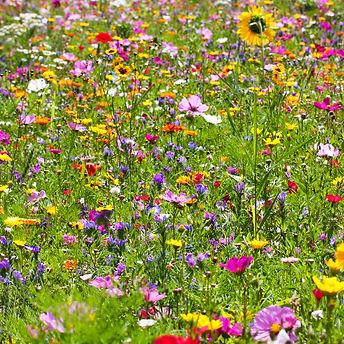 flowers-field-background.jpg