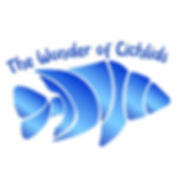 wonder of cichlids.jpg