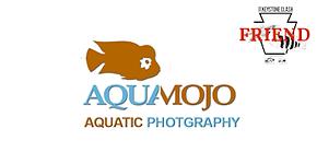 AquaMojo.png
