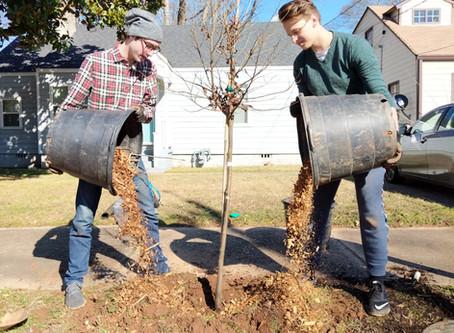 Planting Trees in Atlanta