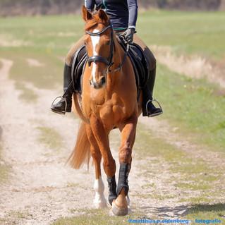 spantanes Pferdeshooting mit Reiterin