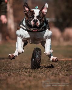 Hundeshooting mit Sir Arni