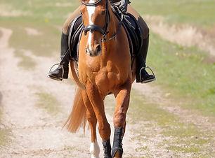 Fuchs-Pferd-Reiter-IMG_0073.JPG