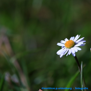 blume-IMG_0159.JPG