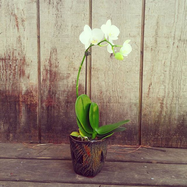 orchid pot $30