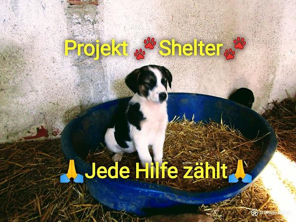 Shelter1.jpg