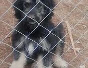 Verein, Tierschutz, Hundepension, Vermittlung