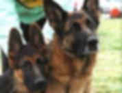 Breeders-dogs.jpg