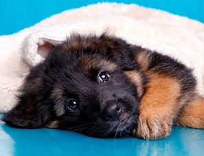consider puppy.jpg