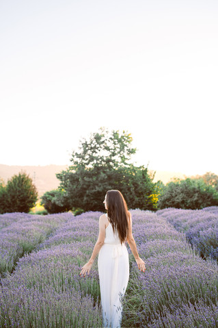 Lavander garden in Napa Valley