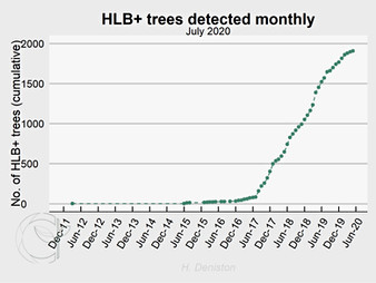 Cumulative HLB+ trees found and removed