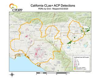 CA CLas+ ACP detections by grid
