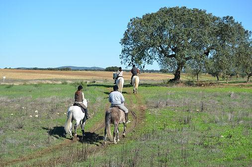Passeios a Cavalo / Horseback riding Monte Barrão, Alentejo, Alter do Chão, Portugal