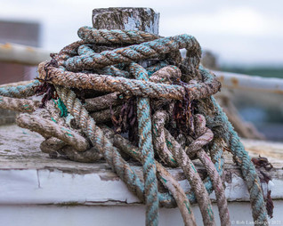 Knots-a-plenty