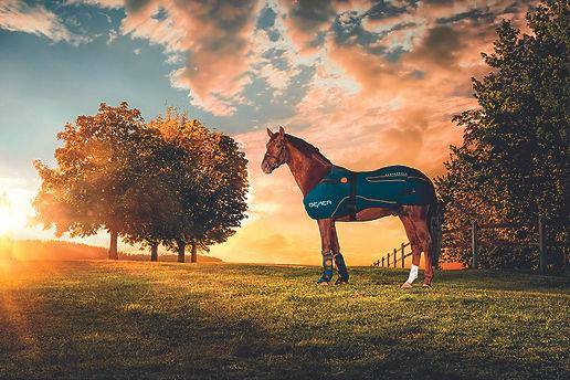 cheval heureux thérapie Bemer