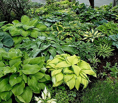 Hosta-Garden-2-fixed.jpg