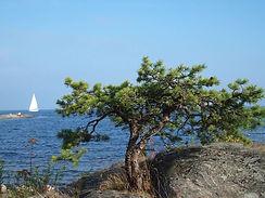 sail-988531_1280.jpg
