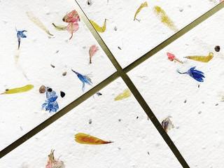 Seed Paper - Botanica