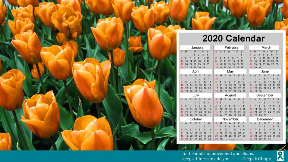 Tulips Desktop Background