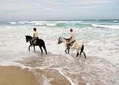 chevaux du lac web..jpg